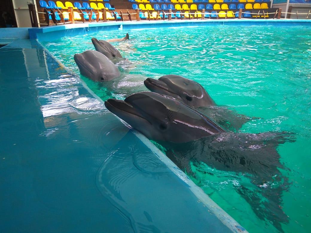 У самца дельфина есть член